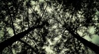 trees bottom view branches 4k 1540574961 200x110 - trees, bottom view, branches 4k - Trees, branches, bottom view