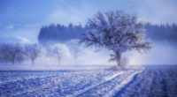 trees covered with snow fog landscape winter 4k 1540135271 200x110 - Trees Covered With Snow Fog Landscape Winter 4k - winter wallpapers, trees wallpapers, snow wallpapers, landscape wallpapers, hd-wallpapers, fog wallpapers, 4k-wallpapers