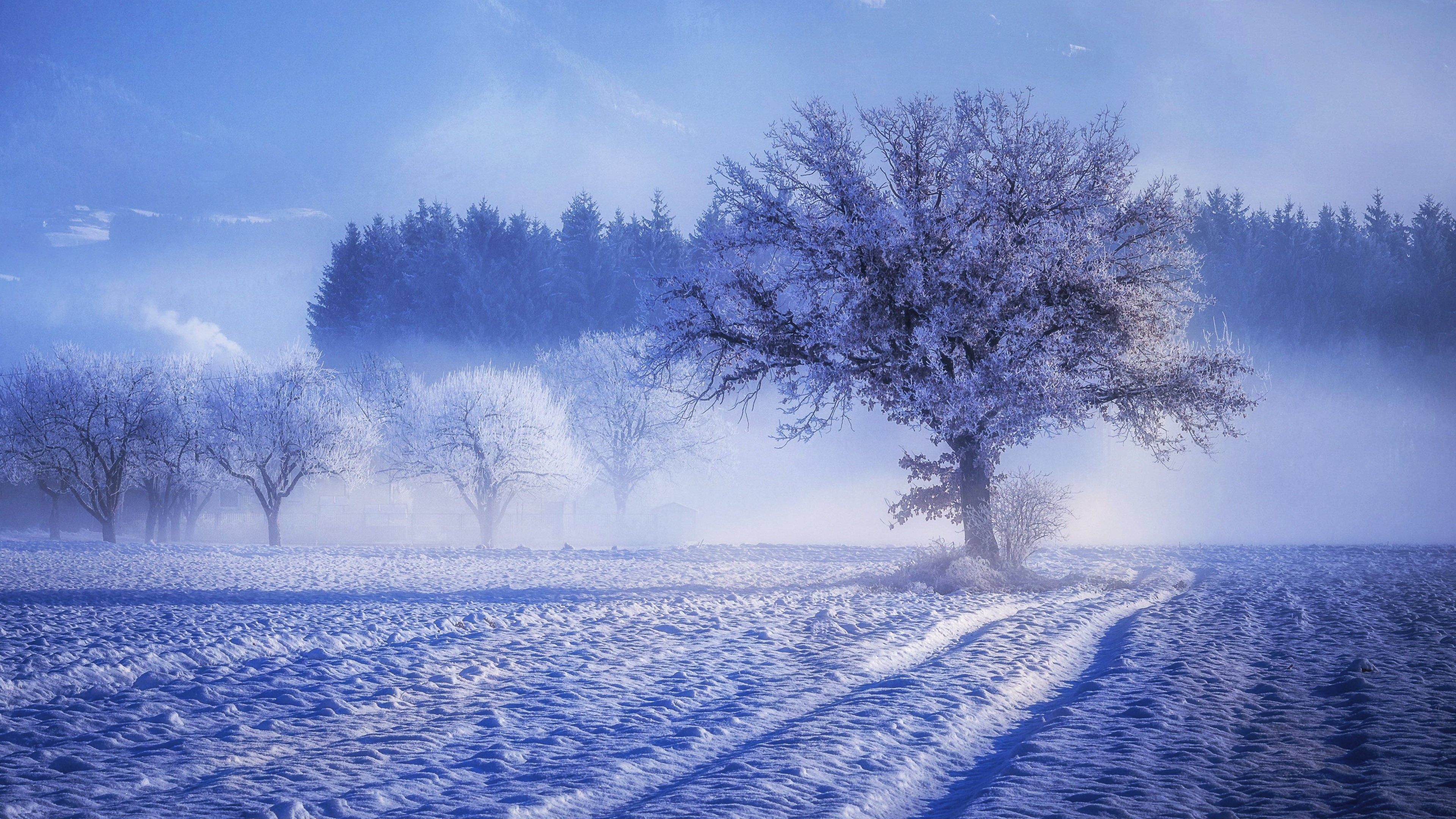Wallpaper 4k Trees Covered With Snow Fog Landscape Winter 4k