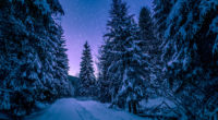 trees covered with snow freezing forest winter 4k 1540135667 200x110 - Trees Covered With Snow Freezing Forest Winter 4k - winter wallpapers, trees wallpapers, snow wallpapers, nature wallpapers, hd-wallpapers, forest wallpapers, 5k wallpapers, 4k-wallpapers