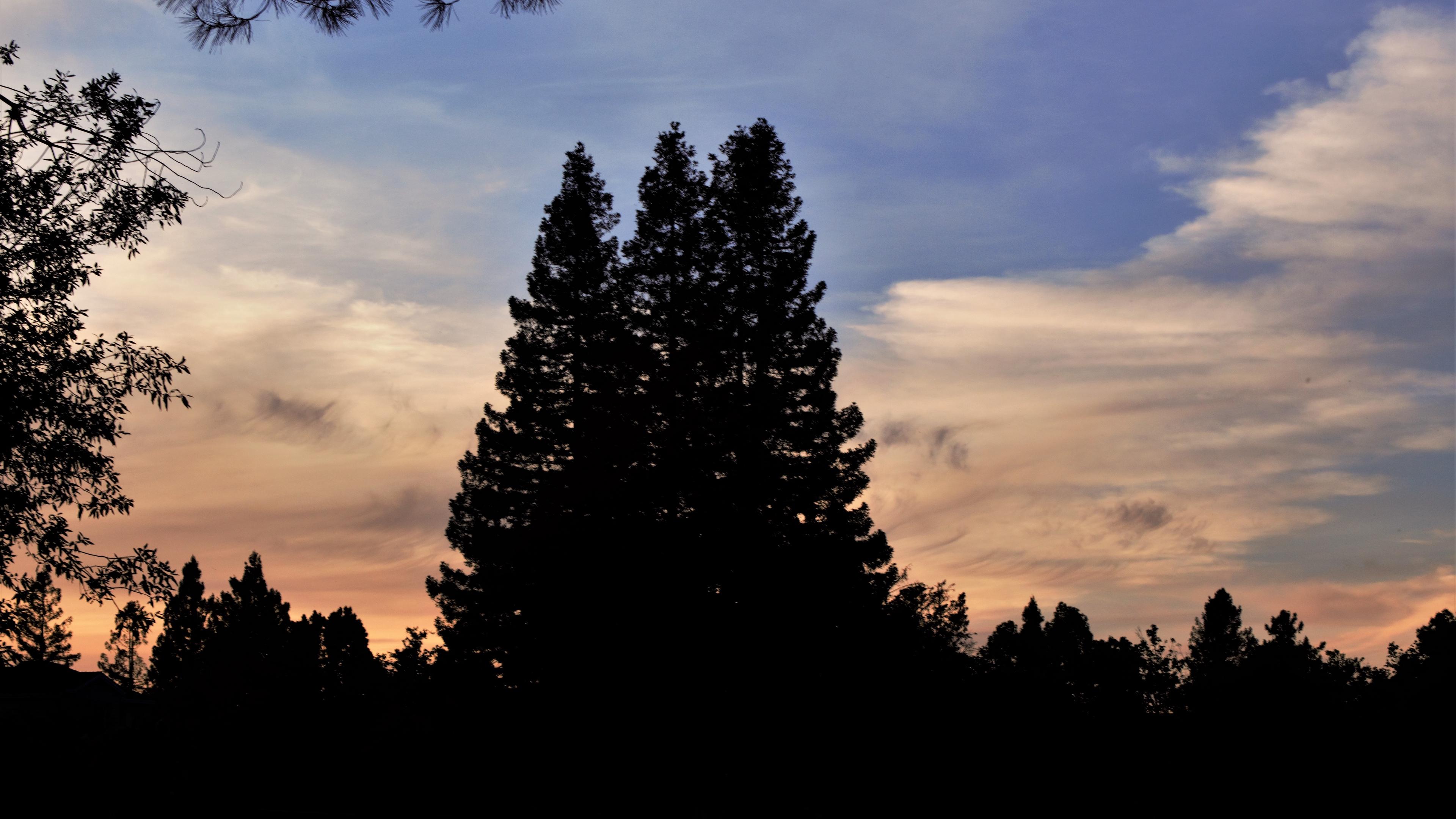 trees dark sky 4k 1540575806 - trees, dark, sky 4k - Trees, Sky, Dark