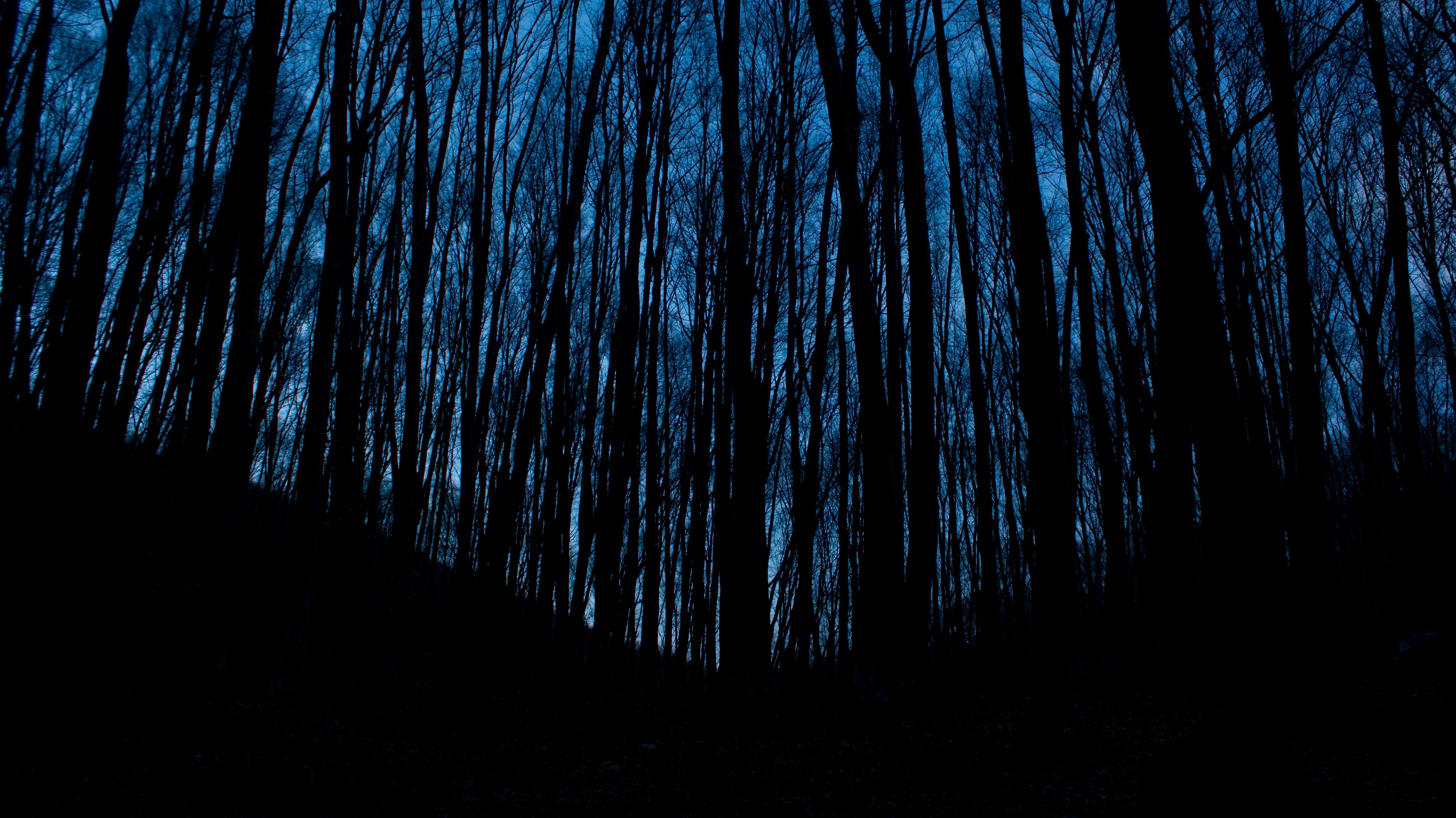 trees forest dark night 4k 1540576076 - trees, forest, dark, night 4k - Trees, Forest, Dark