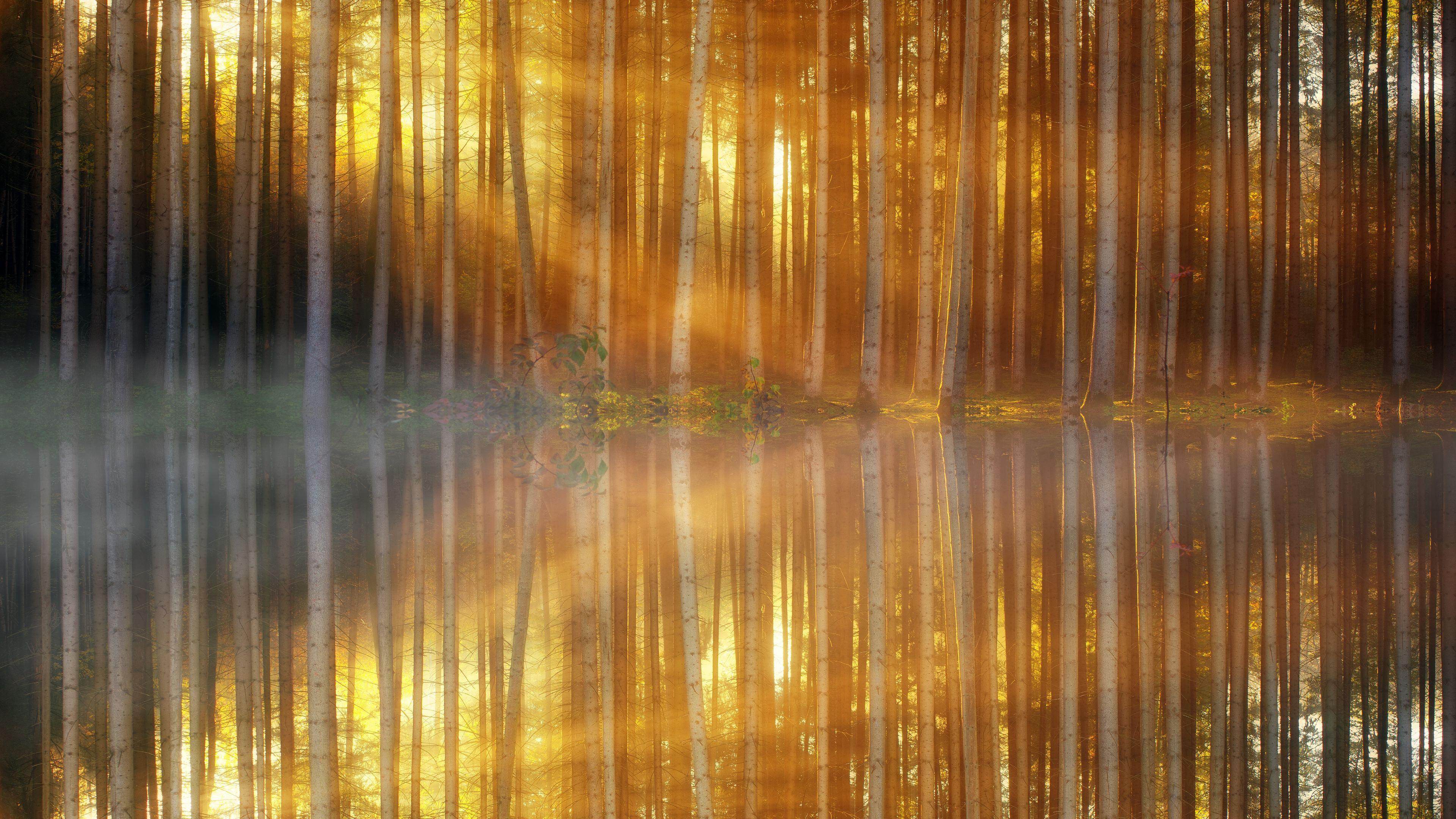 trees lakes sunbeams 4k 1540136528 - Trees Lakes Sunbeams 4k - trees wallpapers, sunbeam wallpapers, nature wallpapers, lake wallpapers, hd-wallpapers, 5k wallpapers, 4k-wallpapers
