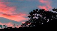 trees leaves sunset sky 4k 1540575271 200x110 - trees, leaves, sunset, sky 4k - Trees, sunset, Leaves