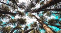 trees tops bottom view sky branches 4k 1540145429 200x110 - trees, tops, bottom view, sky, branches 4k - Trees, tops, bottom view