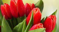 tulips drops leaves flower 4k 1540065039 200x110 - tulips, drops, leaves, flower 4k - Tulips, Leaves, Drops