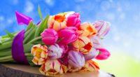 tulips flowers bouquet 4k 1540064795 200x110 - tulips, flowers, bouquet 4k - Tulips, Flowers, Bouquet