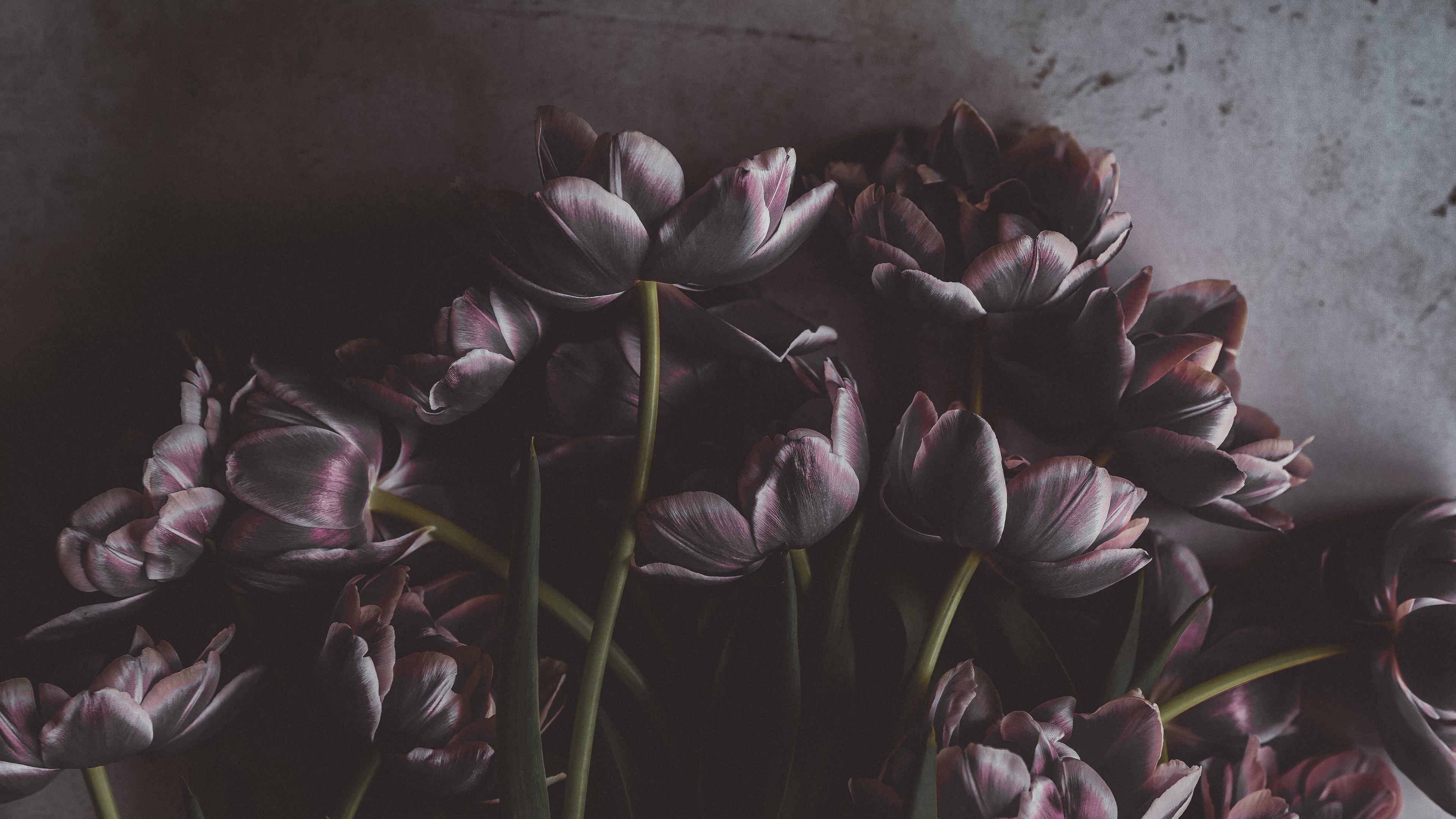 tulips flowers bouquet wall 4k 1540574957 - tulips, flowers, bouquet, wall 4k - Tulips, Flowers, Bouquet