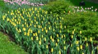 tulips flowers grass herbs 4k 1540064182 200x110 - tulips, flowers, grass, herbs 4k - Tulips, Grass, Flowers