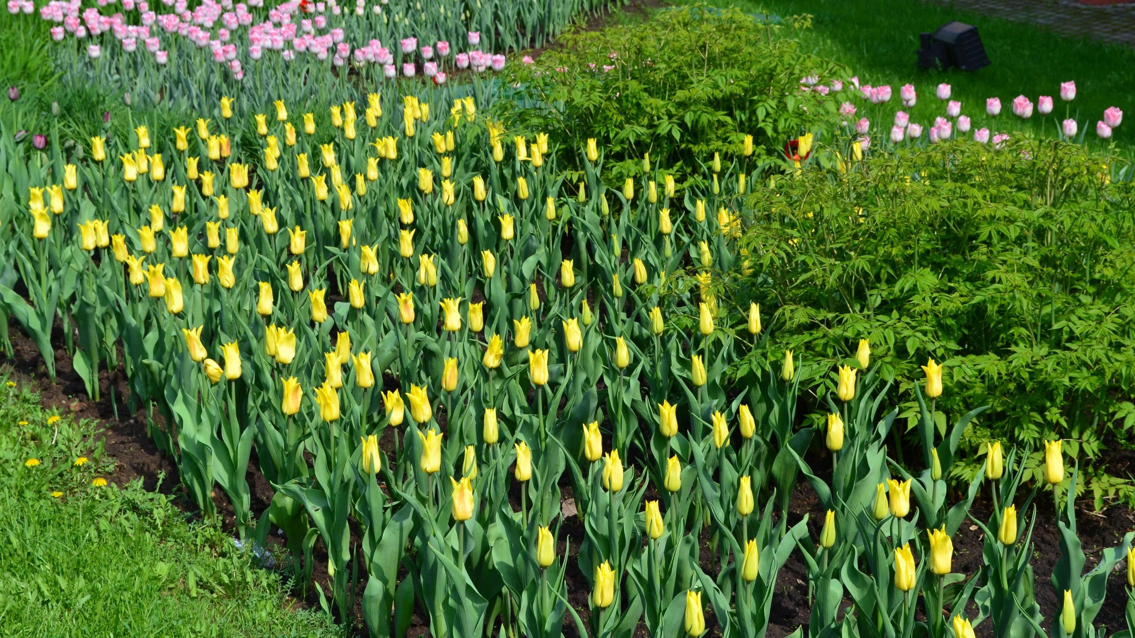 tulips flowers grass herbs 4k 1540064182 - tulips, flowers, grass, herbs 4k - Tulips, Grass, Flowers