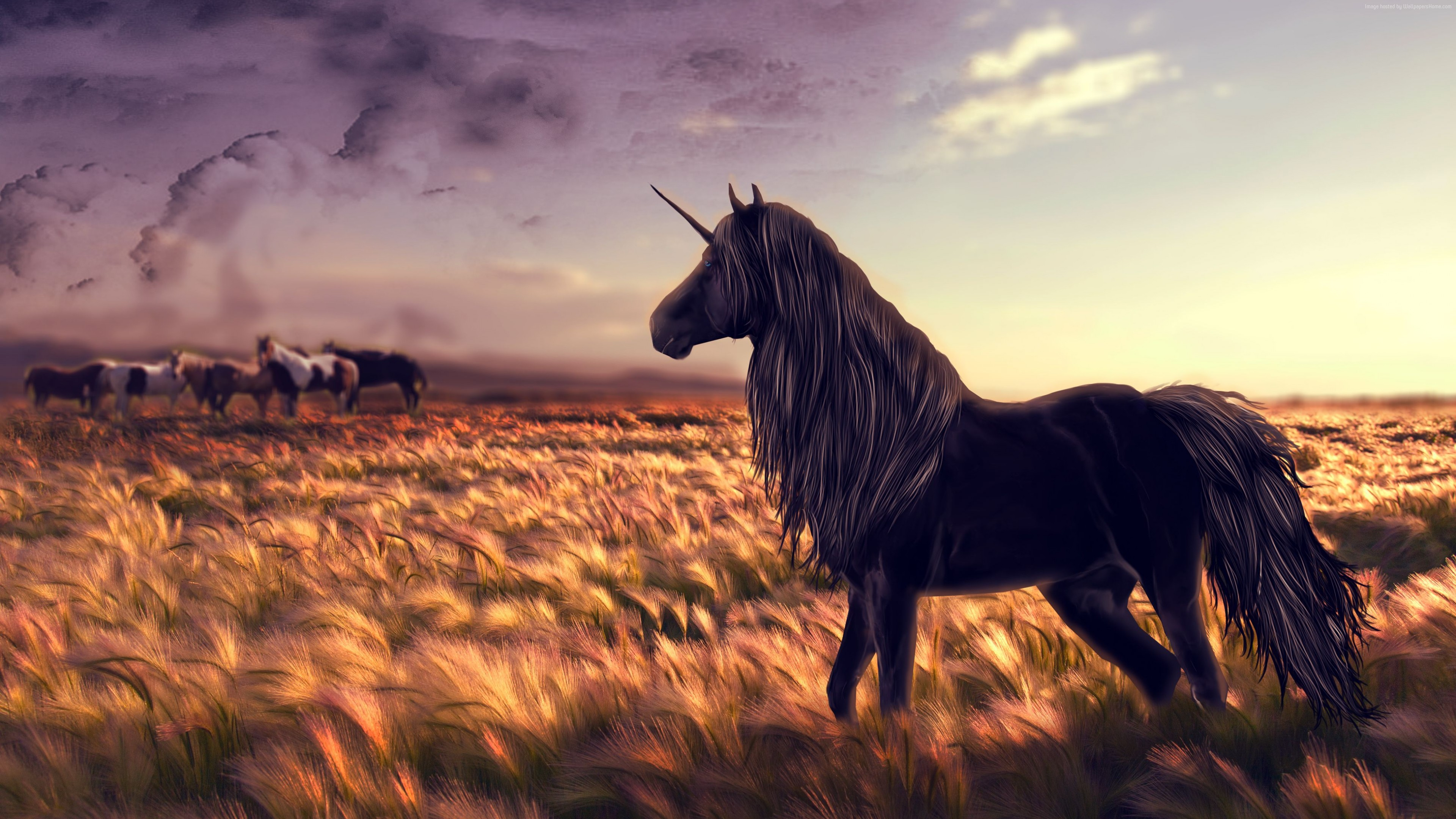 unicorn in field 4k 1540750014 - Unicorn In Field 4k - unicorn wallpapers, hd-wallpapers, digital art wallpapers, artwork wallpapers, artist wallpapers, 4k-wallpapers