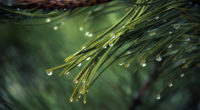 water drops on green pine 4k 1540136952 200x110 - Water Drops On Green Pine 4k - water wallpapers, photography wallpapers, nature wallpapers, macro wallpapers, hd-wallpapers, green wallpapers, drops wallpapers, 4k-wallpapers