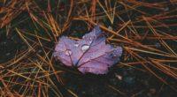 water drops on leaves 4k 1540139469 200x110 - Water Drops On Leaves 4k - water wallpapers, nature wallpapers, leaves wallpapers, hd-wallpapers, drops wallpapers, 5k wallpapers, 4k-wallpapers