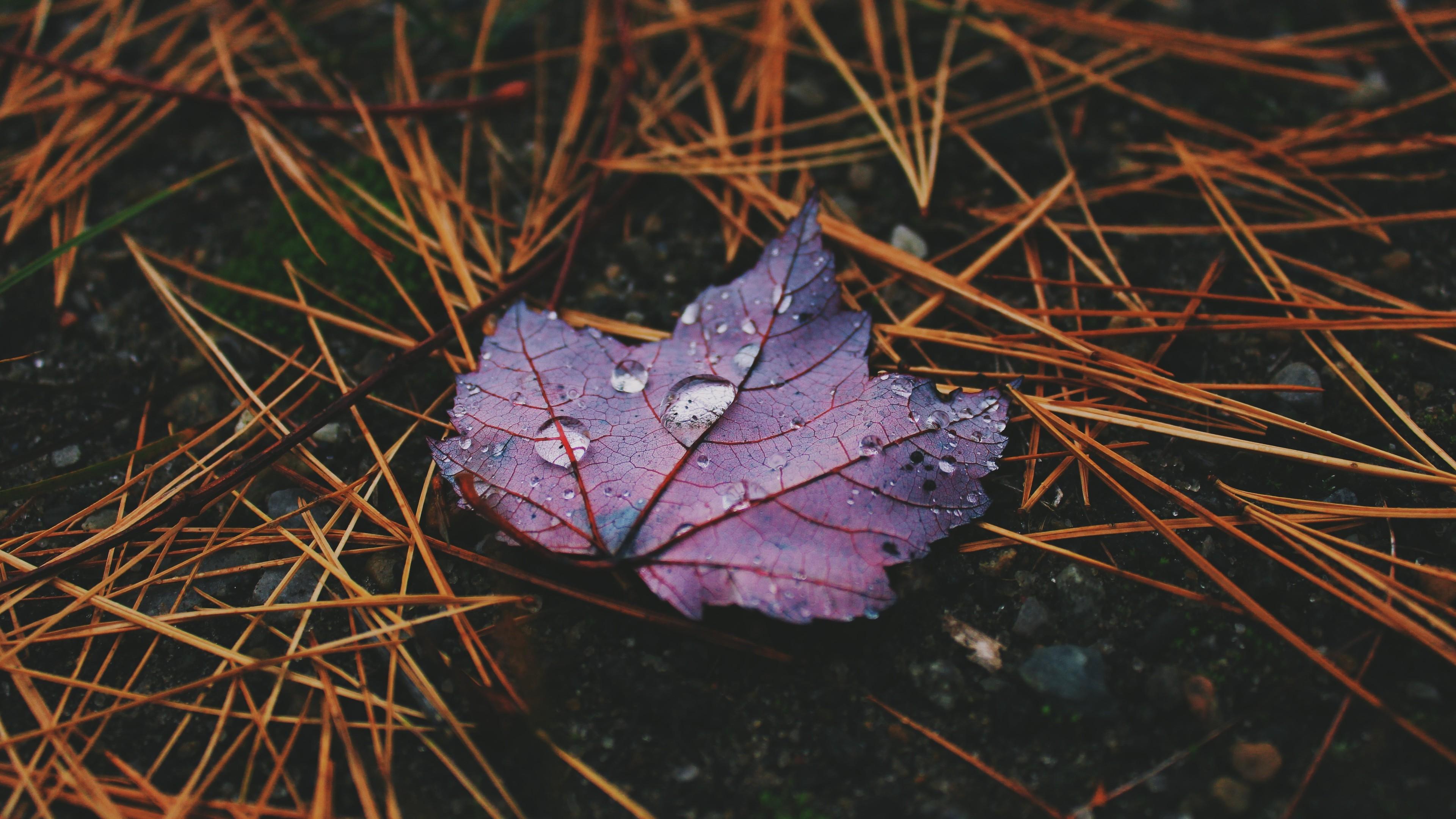 water drops on leaves 4k 1540139469 - Water Drops On Leaves 4k - water wallpapers, nature wallpapers, leaves wallpapers, hd-wallpapers, drops wallpapers, 5k wallpapers, 4k-wallpapers