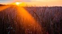 wheat field sun beams photography 4k 1540135269 200x110 - Wheat Field Sun Beams Photography 4k - sunbeam wallpapers, photography wallpapers, nature wallpapers, hd-wallpapers, field wallpapers, 5k wallpapers, 4k-wallpapers