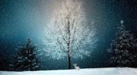 winter snow tree 4k 1540134422 200x110 - Winter Snow Tree 4k - winter wallpapers, trees wallpapers, snow wallpapers, hd-wallpapers, 5k wallpapers, 4k-wallpapers