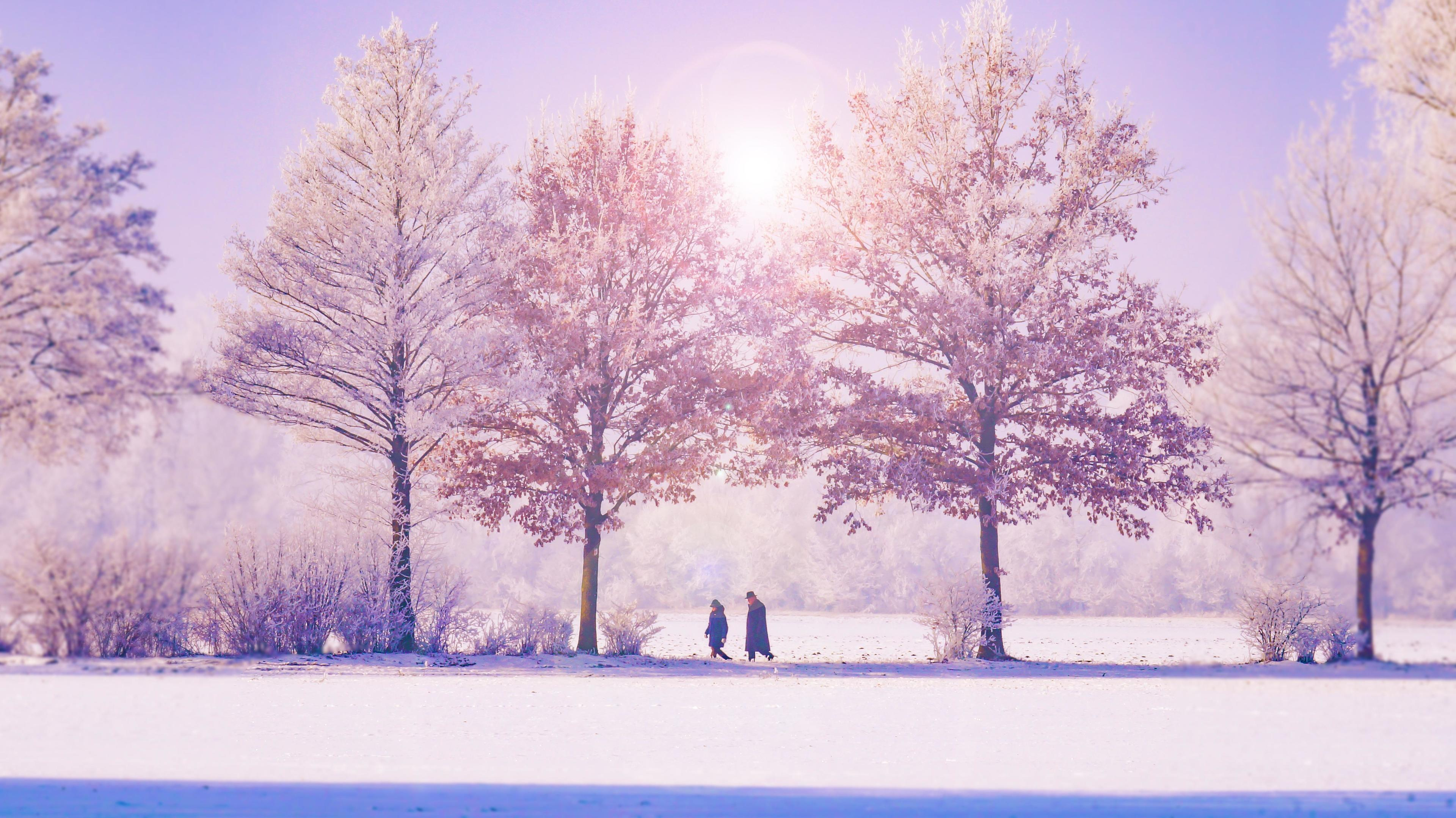 winter trees 4k 1540133502 - Winter Trees 4k - winter wallpapers, trees wallpapers, nature wallpapers, hd-wallpapers, 5k wallpapers, 4k-wallpapers