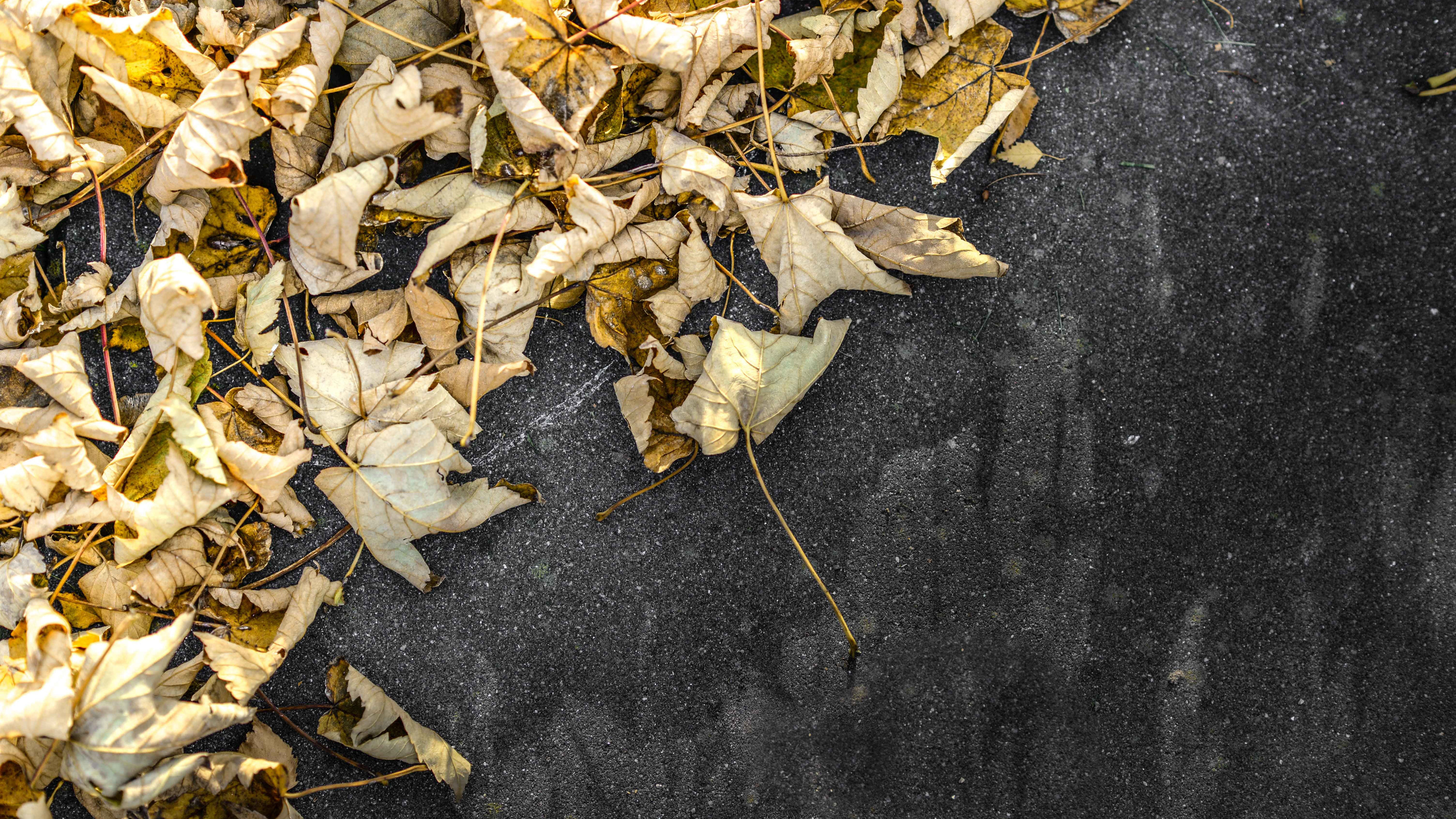 yellow leaves on ground 4k 1540134125 - Yellow Leaves On Ground 4k - nature wallpapers, leaves wallpapers, hd-wallpapers, ground wallpapers, 5k wallpapers, 4k-wallpapers