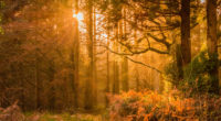 yellow sunset rays in forest 4k 1540135722 200x110 - Yellow Sunset Rays In Forest 4k - sunset wallpapers, nature wallpapers, hd-wallpapers, forest wallpapers, 5k wallpapers, 4k-wallpapers