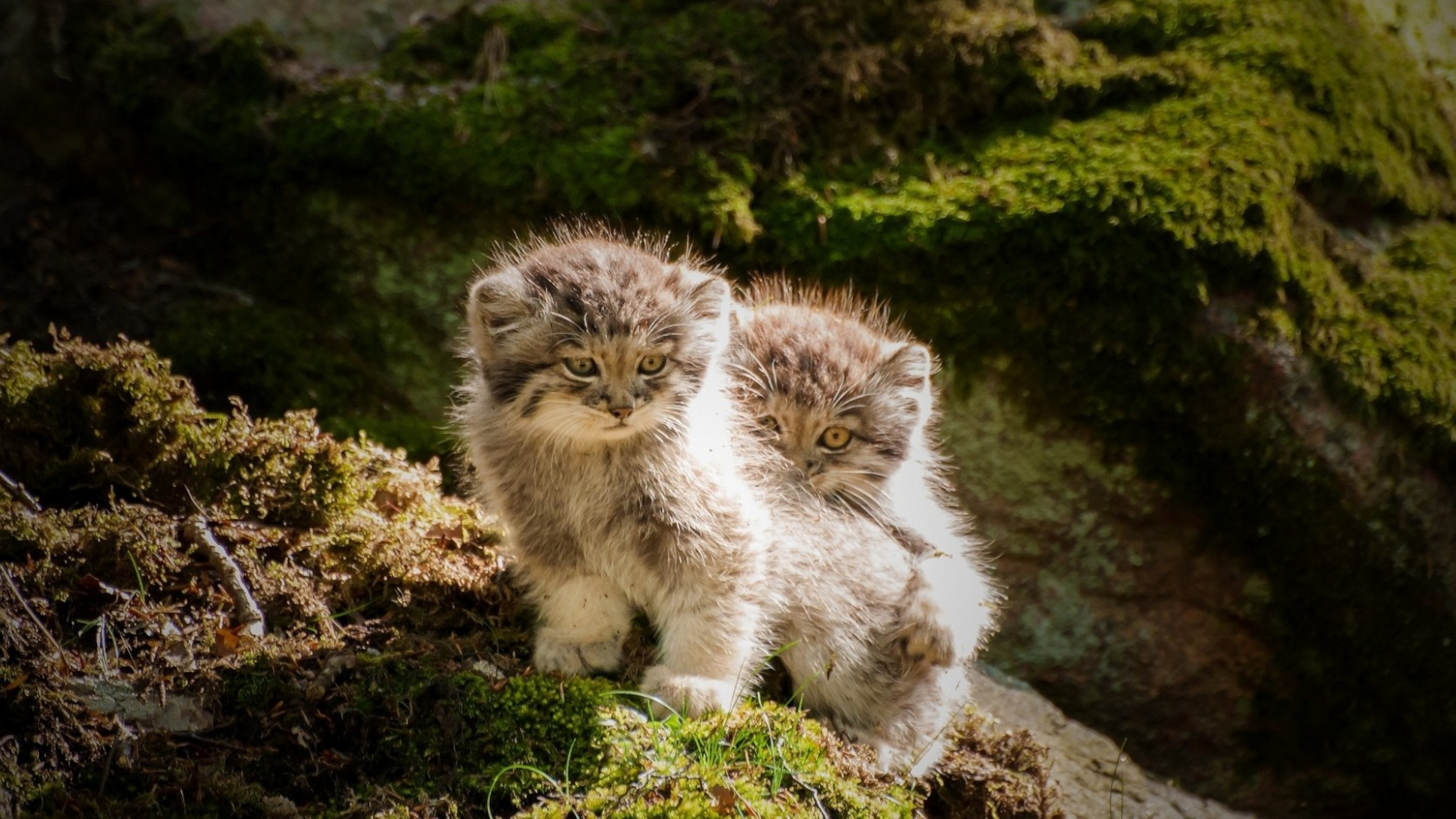 adorable kitty 1542237649 - Adorable Kitty - cat wallpapers, animals wallpapers