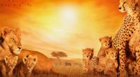african cats 4k 1542238056 200x110 - African Cats 4k - lion wallpapers, cheetah wallpapers, cats wallpapers, animals wallpapers, african wallpapers