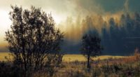 autumn fog dawn trees 4k 1541117268 200x110 - autumn, fog, dawn, trees 4k - fog, Dawn, Autumn