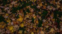 autumn foliage maple fallen grass 4k 1541113740 200x110 - autumn, foliage, maple, fallen, grass 4k - Maple, foliage, Autumn