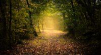 autumn forest fog path foliage 4k 1541117903 200x110 - autumn, forest, fog, path, foliage 4k - Forest, fog, Autumn