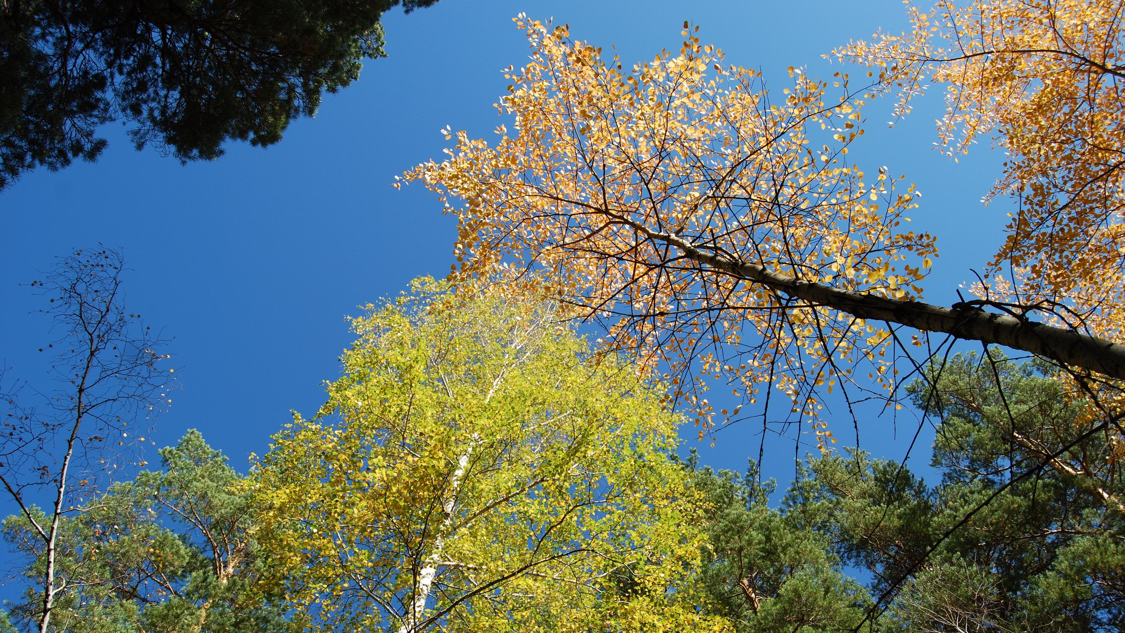 autumn forest sky 4k 1541114494 - autumn, forest, sky 4k - Sky, Forest, Autumn