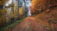 autumn path foliage 4k 1541115943 200x110 - autumn, path, foliage 4k - path, foliage, Autumn
