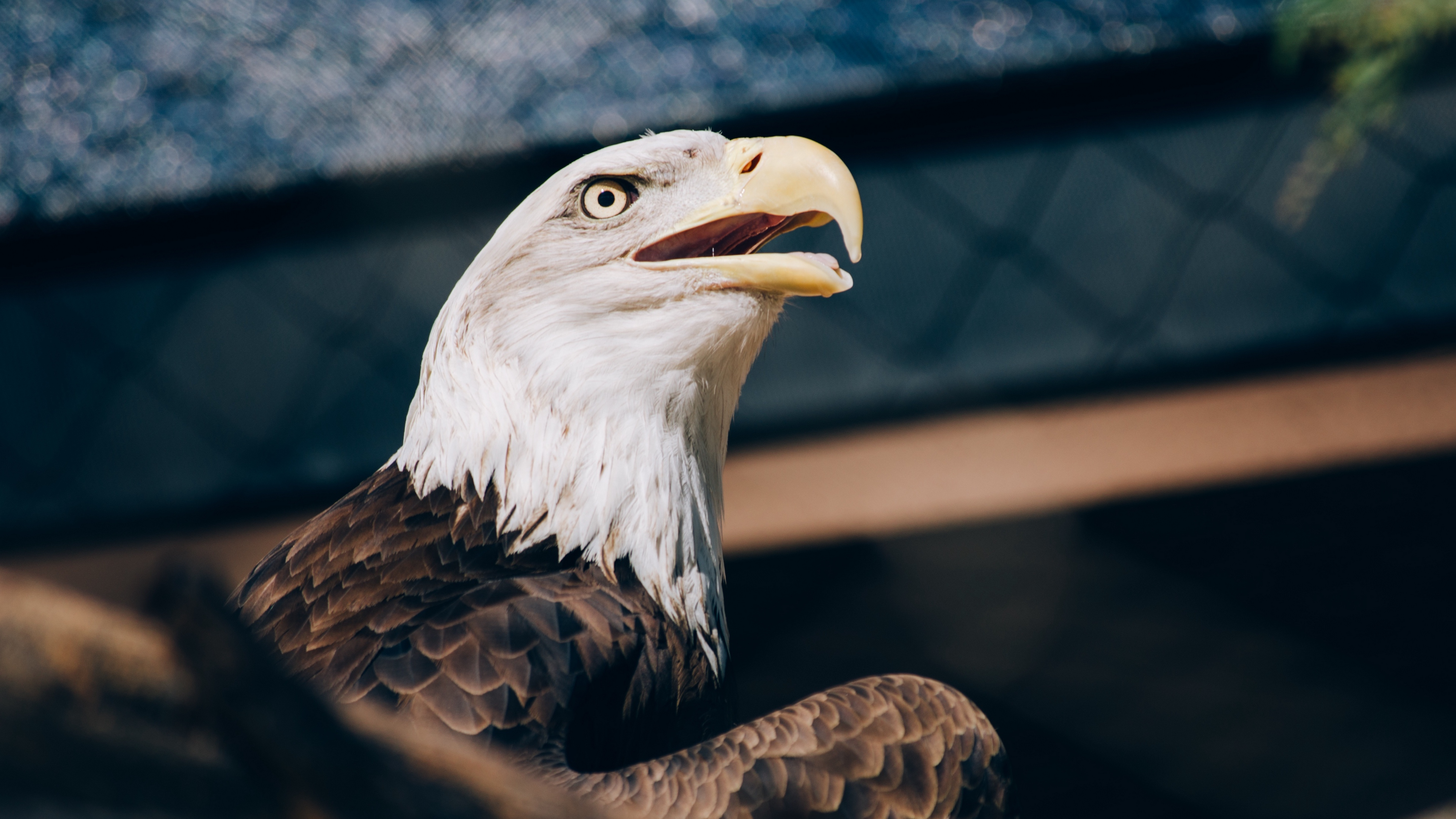 bald eagle eagle bird beak predator 4k 1542242012 - bald eagle, eagle, bird, beak, predator 4k - Eagle, Bird, bald eagle