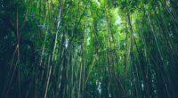 bamboo trees thickets 4k 1541117412 200x110 - bamboo, trees, thickets 4k - Trees, thickets, bamboo