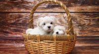basket of puppies 1542238601 200x110 - Basket Of Puppies - puppy wallpapers, hd-wallpapers, cute wallpapers, basket wallpapers, animals wallpapers, 4k-wallpapers