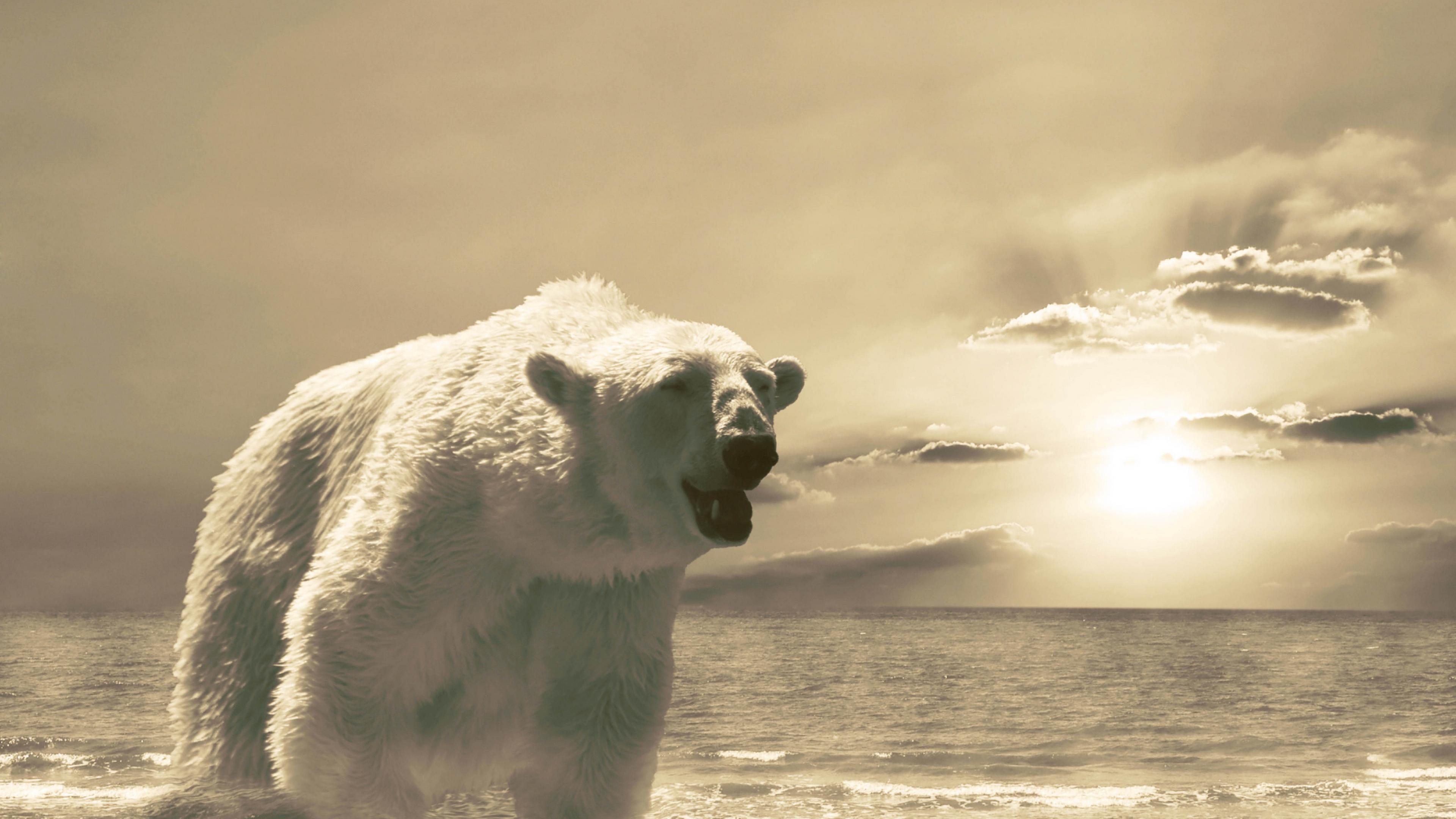 bear ice ocean cold snow winter 4k 1542242896 - bear, ice, ocean, cold, snow, winter 4k - Ocean, Ice, Bear