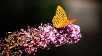 beautiful butterfly 4k 1542238175 200x110 - Beautiful Butterfly 4k - butterfly wallpapers, animals wallpapers, 4k-wallpapers