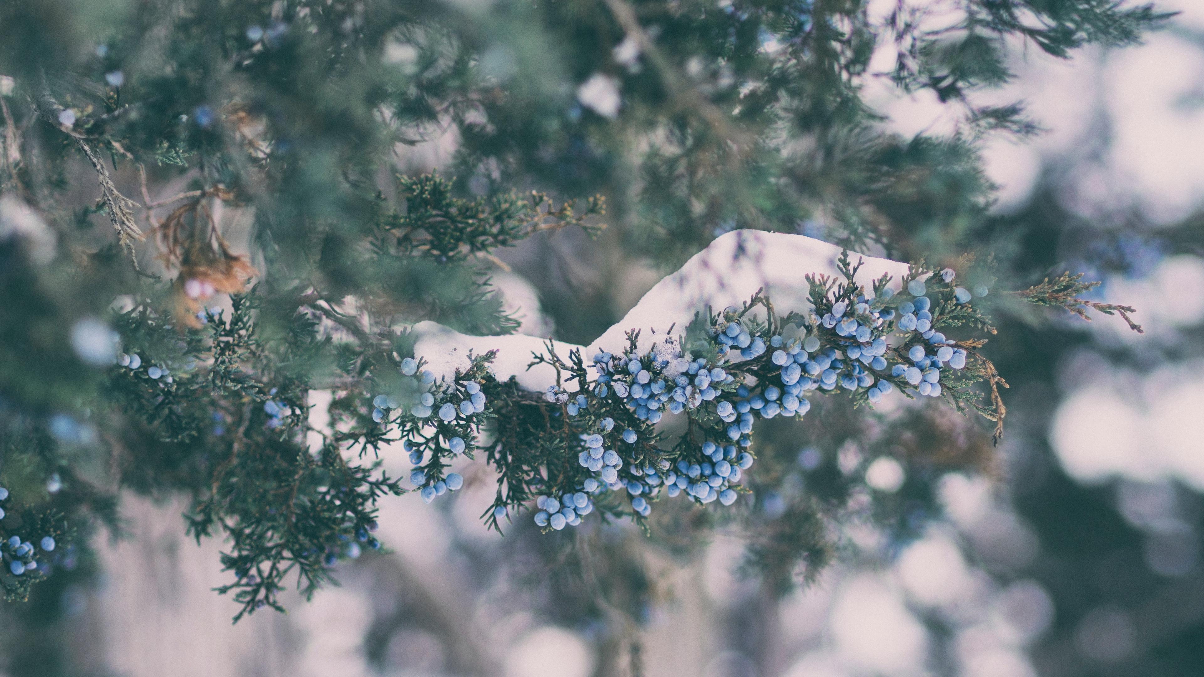 berry branch glare 4k 1541116369 - berry, branch, glare 4k - glare, branch, Berry