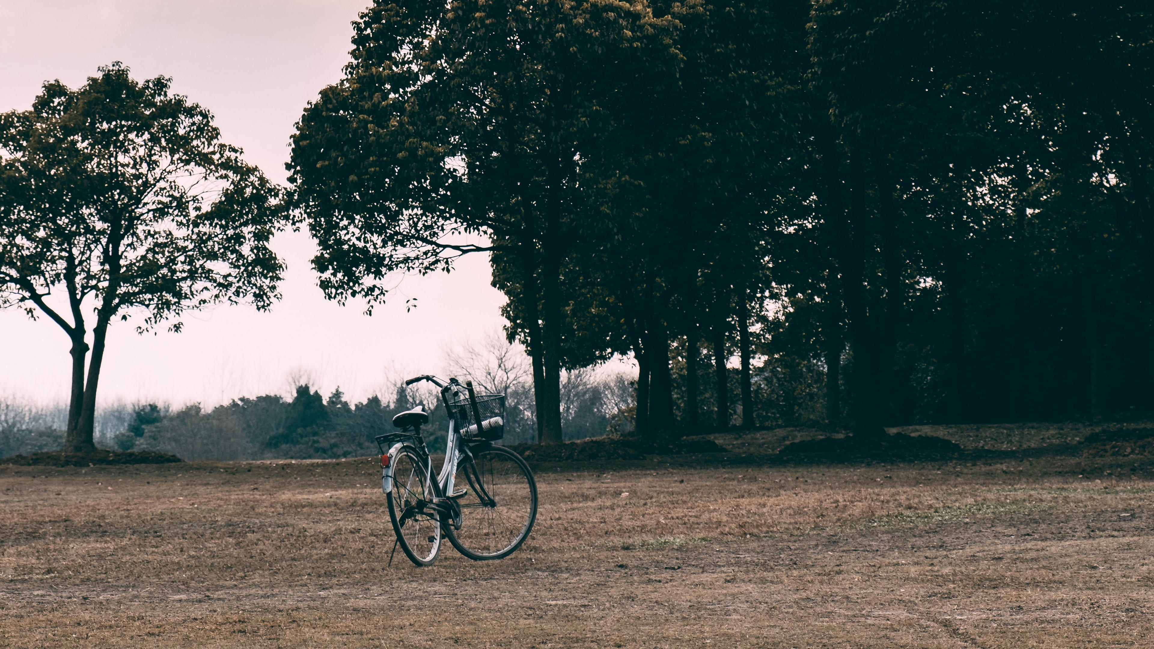bicycle trees grass clearing clouds overcast 4k 1541116892 - bicycle, trees, grass, clearing, clouds, overcast 4k - Trees, Grass, Bicycle