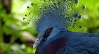 bird dove feathers 4k 1542241584 200x110 - bird, dove, feathers 4k - Feathers, Dove, Bird