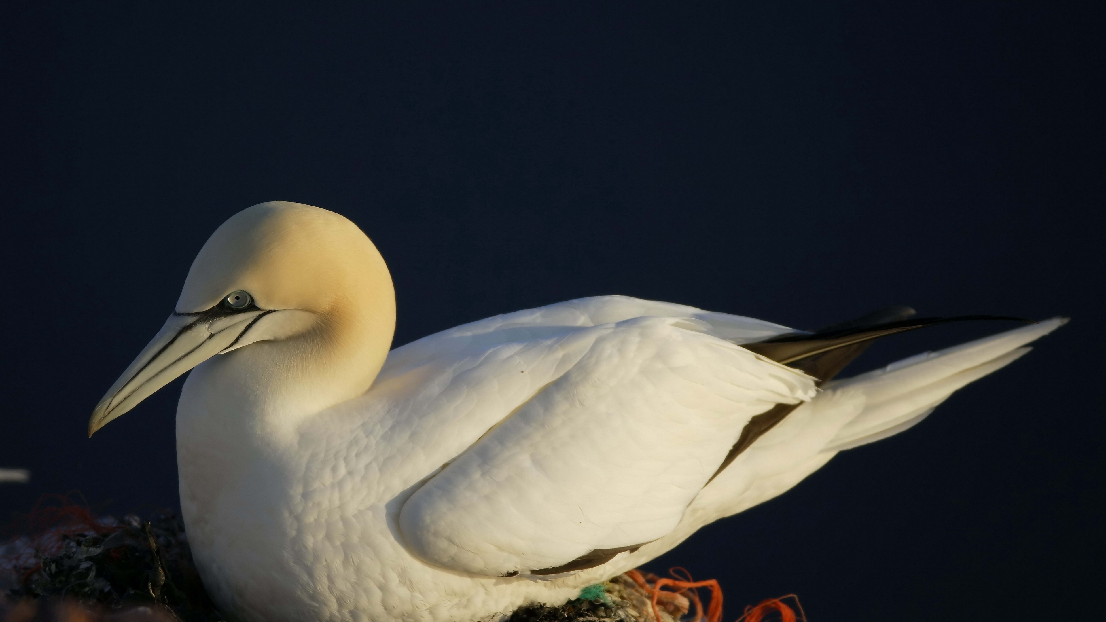 bird nest seagull 4k 1542241625 - bird, nest, seagull 4k - Seagull, Nest, Bird