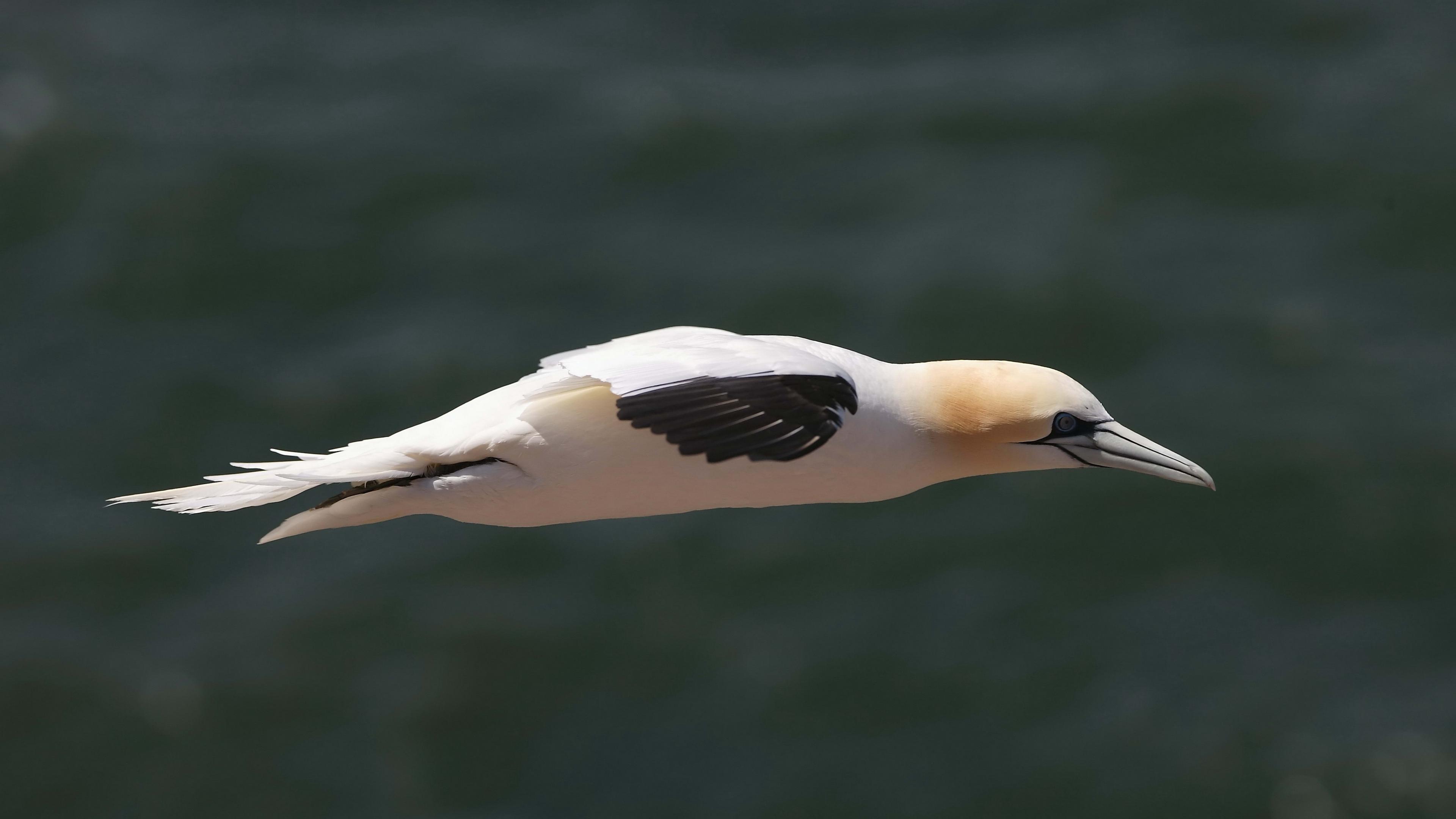 bird prey boom flight 4k 1542242124 - bird, prey, boom, flight 4k - prey, boom, Bird