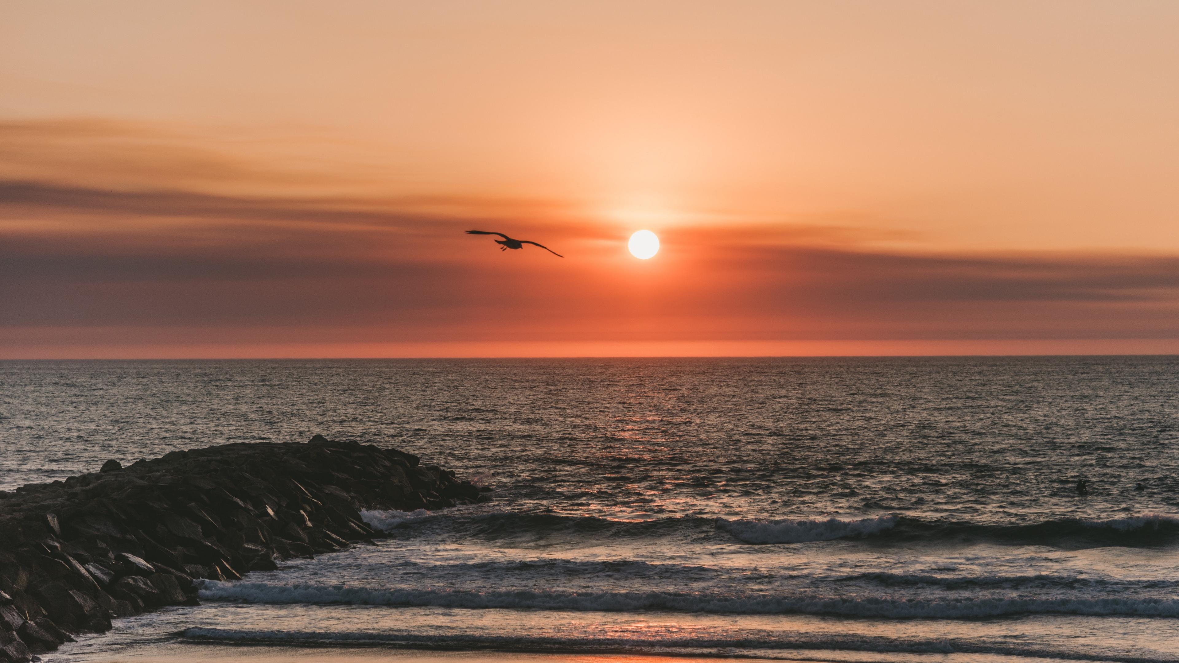 bird sea flight sunset 4k 1541115091 - bird, sea, flight, sunset 4k - Sea, Flight, Bird