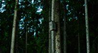 birdhouse tree forest 4k 1541114736 200x110 - birdhouse, tree, forest 4k - tree, Forest, birdhouse