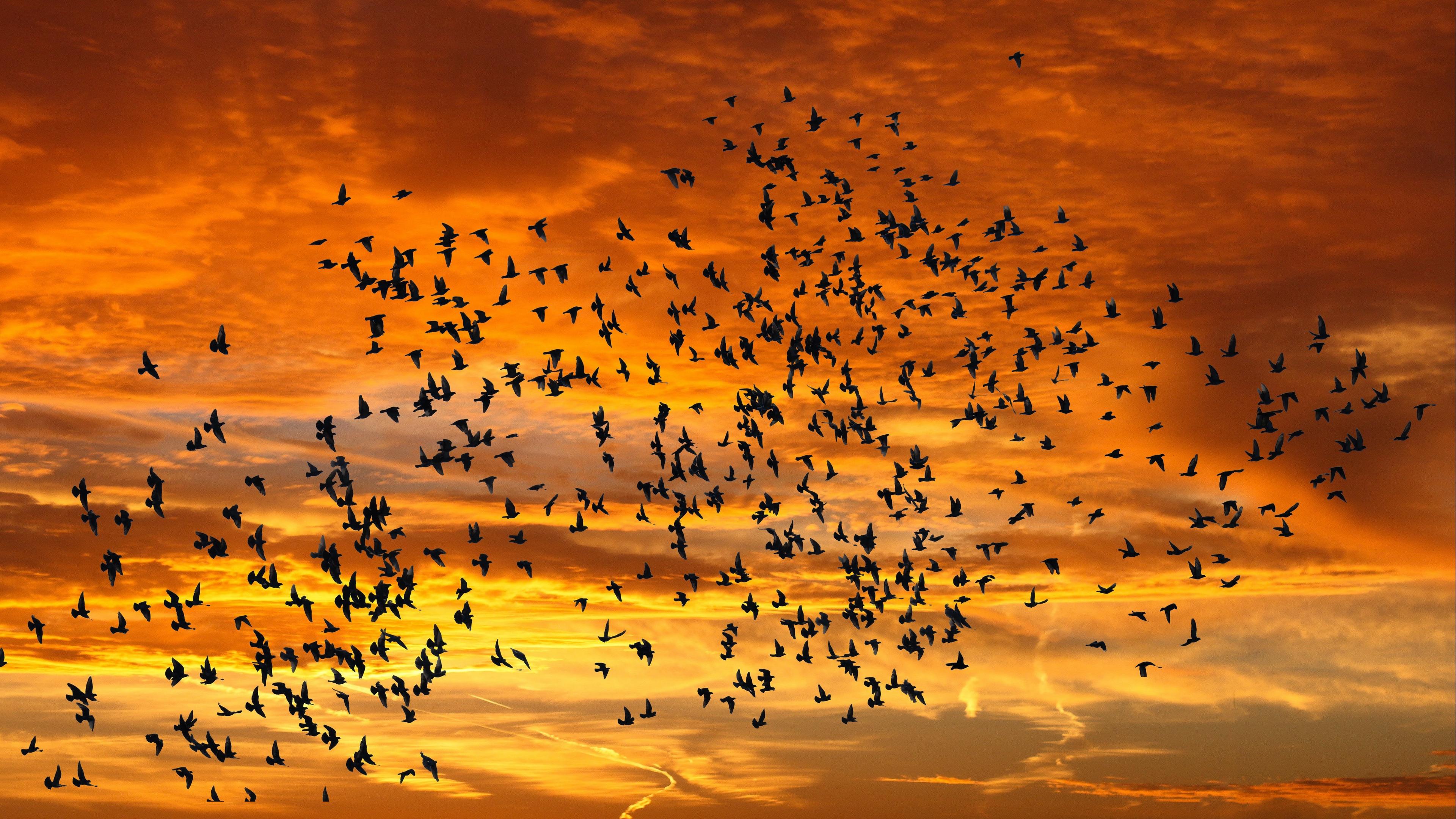 birds silhouettes sky flight sunset clouds 4k 1541116657 - birds, silhouettes, sky, flight, sunset, clouds 4k - Sky, silhouettes, Birds