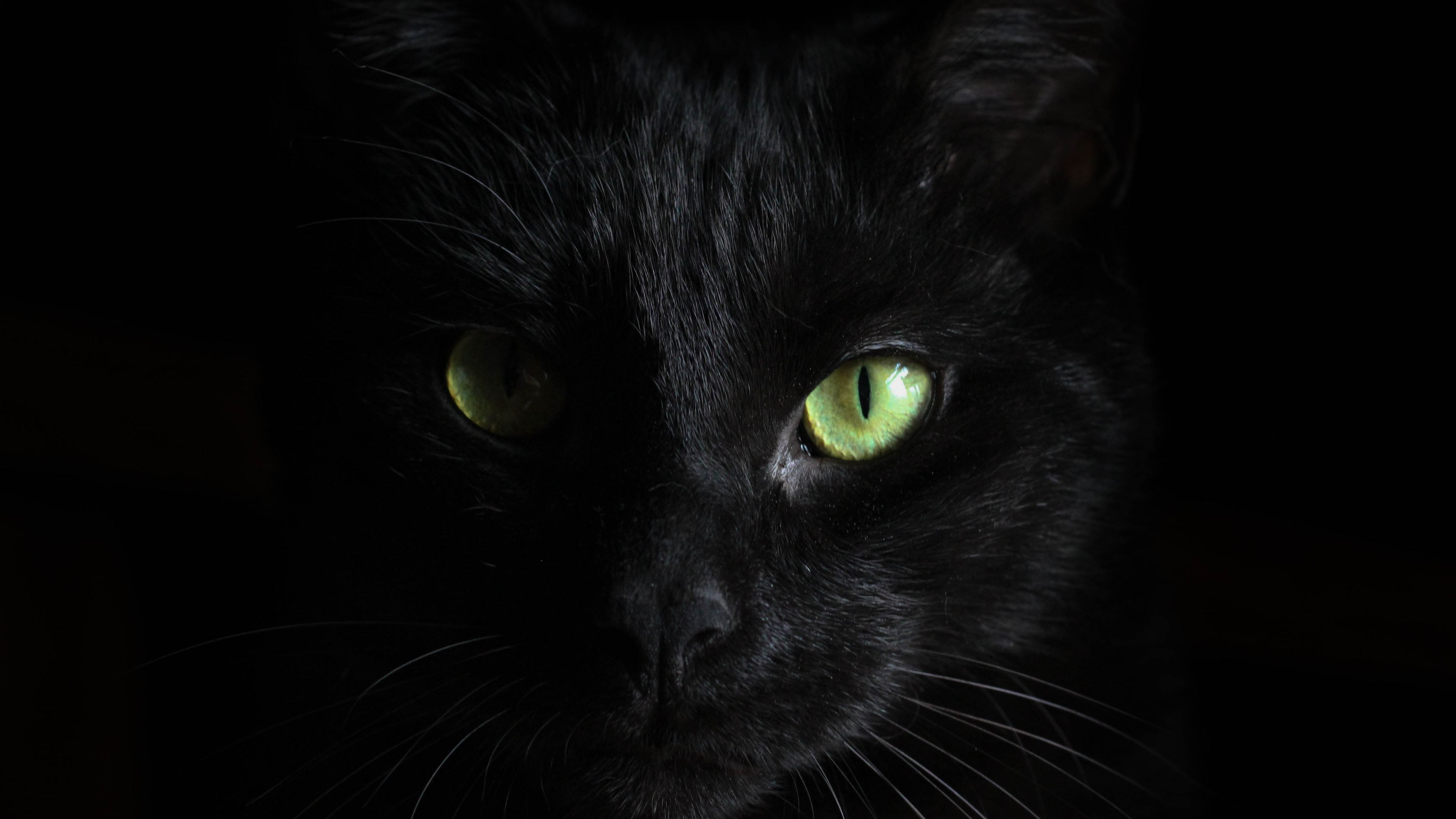 black cat green eyes 1542239106 - Black Cat Green Eyes - hd-wallpapers, dark wallpapers, cat wallpapers, black wallpapers, animals wallpapers, 4k-wallpapers