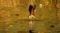 botswana bird africa flight 4k 1542242253 200x110 - botswana, bird, africa, flight 4k - Botswana, Bird, Africa