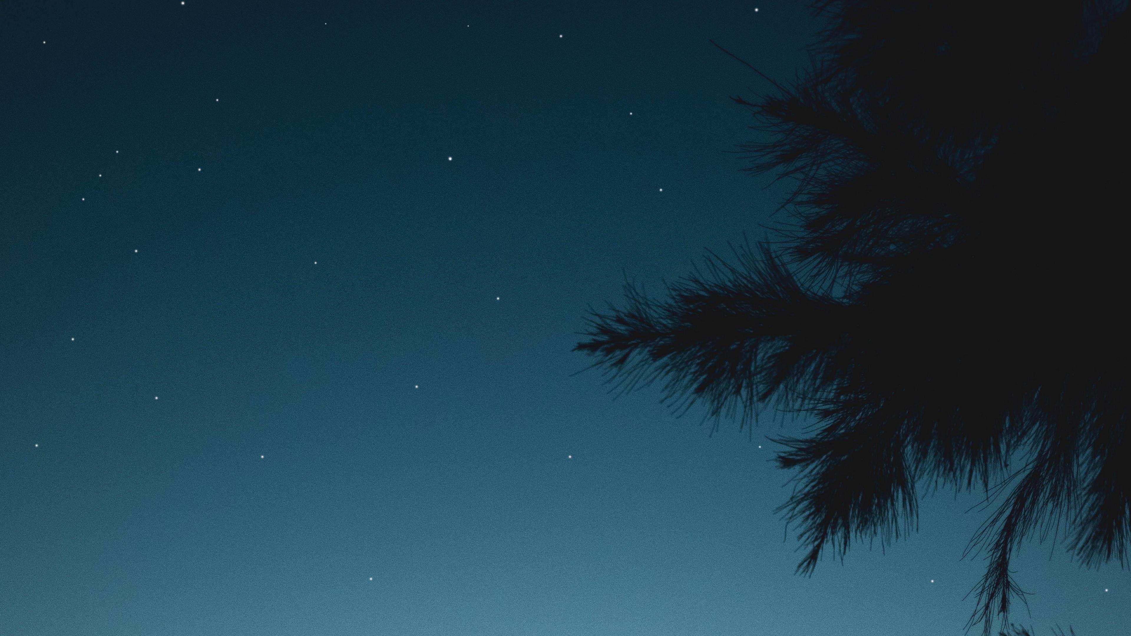 branch night starry sky 4k 1541117373 - branch, night, starry sky 4k - starry sky, Night, branch
