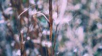 branch plant blur 4k 1541114808 200x110 - branch, plant, blur 4k - Plant, branch, Blur