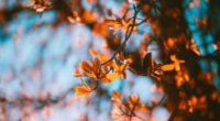 branches blur autumn leaves 4k 1541115772 200x110 - branches, blur, autumn, leaves 4k - branches, Blur, Autumn
