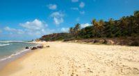 brazil beach sea palm trees sand traces clearly 4k 1541114012 200x110 - brazil, beach, sea, palm trees, sand, traces, clearly 4k - Sea, Brazil, Beach