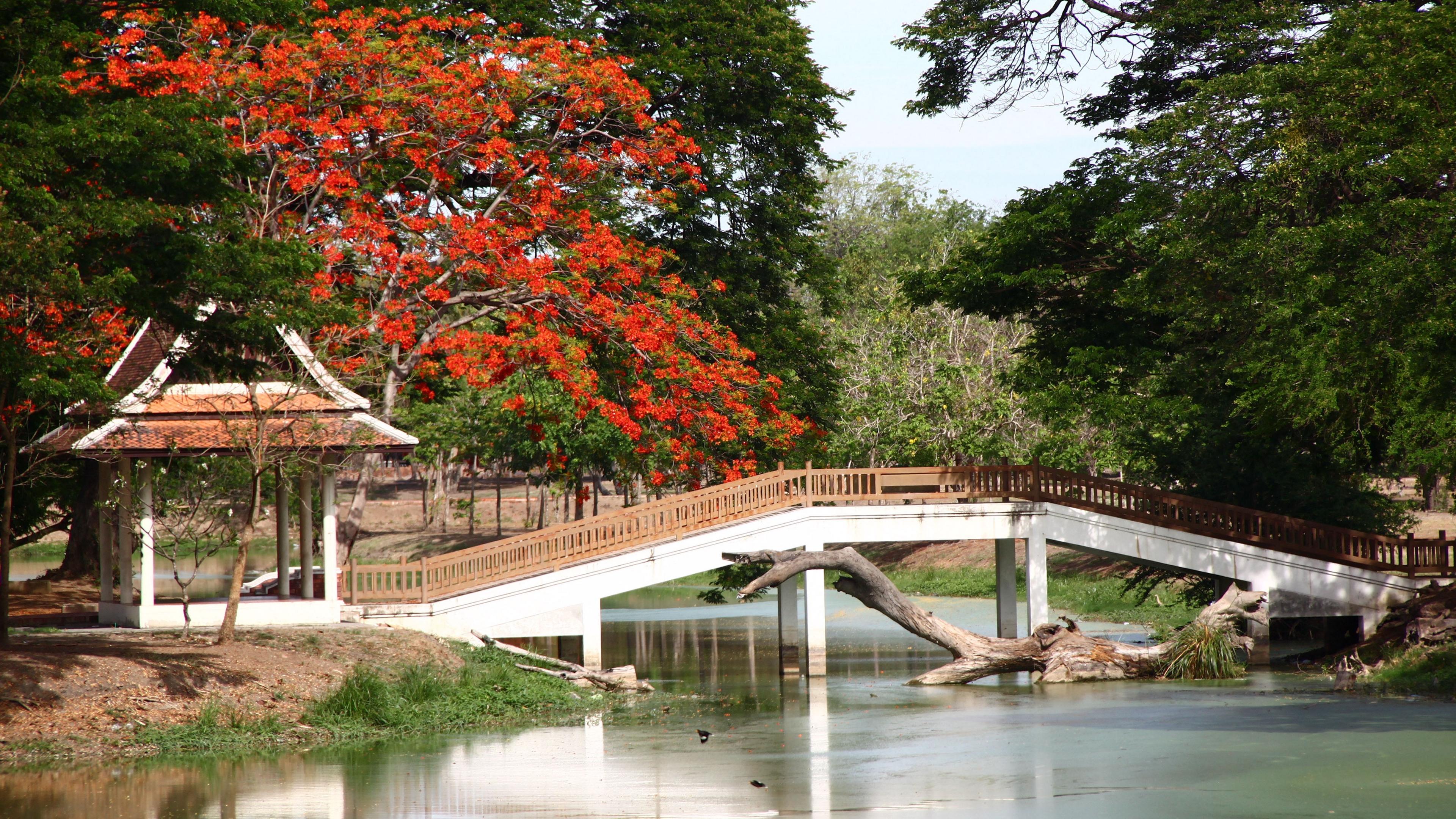 bridge arbor japan snag 4k 1541117609 - bridge, arbor, japan, snag 4k - Japan, bridge, arbor